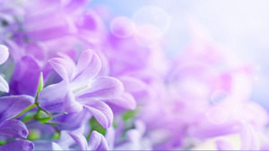 Grafika przedstawia w zbliżeniu fioletowe kwiaty, dzwonki z ginącą ostrością w tle.